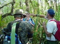 Picture of Guided Everglades Swamp Walking Tour