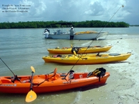 Picture of Small-Group Everglades Eco-Adventure: Explore by Foot, Kayak and Boat