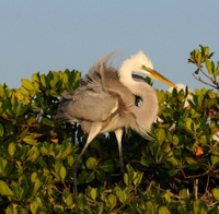 Picture of Small-Group Everglades National Park Tour: Bird Watching and Photography