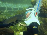 Underwater Helmet-Diving Experience at the Miami Seaquarium Picture