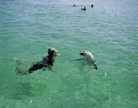 3-Day Eyre Peninsula Wildlife Adventure with Optional Shark Cage Dive from Adelaide, Adelaide City Tours and Sightseeing