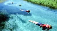 Sucuri River Snorkel Tour from Bonito