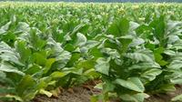 Tobacco Route Full Day Tour from Salta image 1