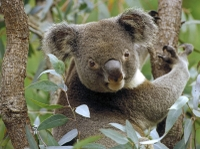 Small-Group Day Trip from Brisbane: Gold Coast Beaches and Koala Education Centre