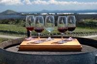 Maipú Wine-Tasting Tour from Mendoza Including Trapiche Winery image 1