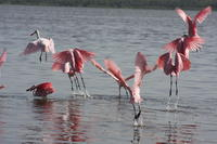 Picture of Small-Group Tour: Everglades Adventure Day Trip from Greater Fort Myers/Naples Area