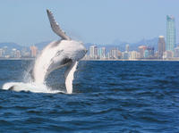 Morning or Afternoon Gold Coast Whale Watching Cruise image 1