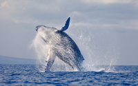 Picture of Stradbroke Island and Whale Watching Cruise Including BBQ Lunch