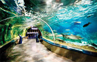 Istanbul Aquarium and Aqua Florya Independent Shopping Trip