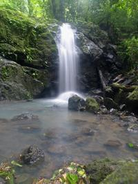11-Day Tour from San Jose: Monteverde Cloud Forest and Tortuguero, Arenal Volcano and Manuel Antonio National Parks