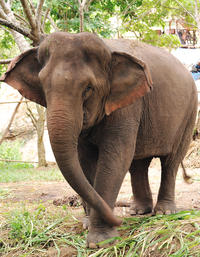 Elephant Orphanage Sanctuary and Aboriginal Settlement Tour from Kuala Lumpur