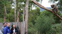 Yarra Valley Wildlife Express (Private Tour)