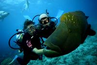 Best Great Barrier Reef Cruise from Cairns