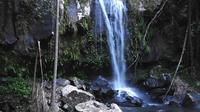 Waterfall and Rainforest Walks and Scenic Half Day Tour from Brisbane