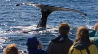 Whale Watch-Mendenhall Glacier and Tracys King Crab Combo