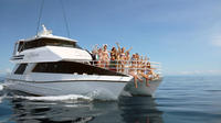 Luxury Outer Great Barrier Reef Island and Reef Tour from Cairns