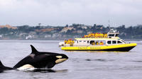 Victoria Whale Watching Adventure in a Covered Vessel