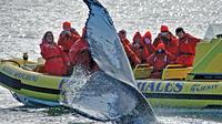 Victoria Whale Watching Adventure in a Zodiac Vessel