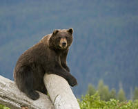 Anchorage Shore Excursion: Pre- or Post-Cruise Turnagain Arm and Alaska Wildlife Tour