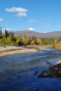 Chena River Canoe Adventure from Fairbanks