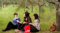 Small Group Wines and Vines of Verona Tour Including Wine Tasting and Lunch