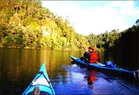 Tauranga Shore Excursion: Wairoa River Kayak Tour, Tauranga Tours and Sightseeing