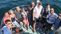 Private Dolphin Safari Charter in Gibraltar