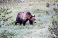 2-Day Yellowstone and Grand Teton National Parks Wildlife Adventure