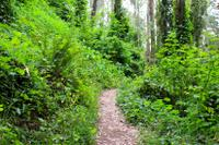 San Francisco Urban Hike: Hills and Hidden Gems Picture