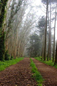 San Francisco Urban Hike: The Presidio