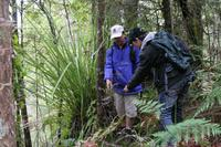 Bay of Islands Shore Excursion: Puketi Rainforest Guided Walk, Paihia Tours and Sightseeing