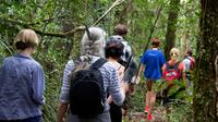 Puketi Rainforest Guided Walks