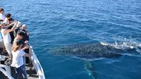 Mooloolaba Whale Watching Cruise