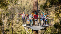 Hollybank Treetops Adventure - Canopy Tours