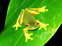 Atherton Tablelands Rainforest Wildlife Tour by Night