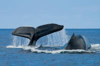 Grand Turk Shore Excursion: Whale Watching Adventure