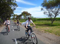 McLaren Vale Wine Tour by Bike, Adelaide City Tours and Sightseeing