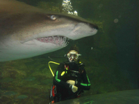 Sunshine Coast UnderWater World Entrance Ticket with Shark Dive Xtreme