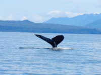 Sitka Whale-Watching and Marine Life Tour