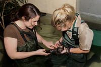 Meet a Platypus at Healesville Sanctuary image 1