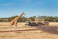 Werribee Open Range Zoo General Admission image 1