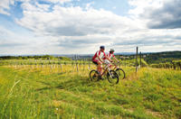 Private Tour: Vienna Woods and Kahlenberg Mountain Bike Ride