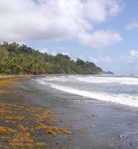 Dominica Day Trip: Indian River Rowboat Tour, Fort Shirley Ruins and Purple Turtle Beach