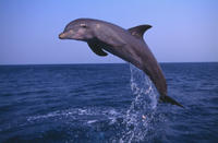 Small-Group Muscat Dolphin Watching and Snorkeling Cruise