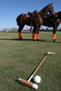 Polo Match and Lesson Day Trip from Buenos Aires