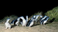Penguins Walks And Wildlife In The Wild