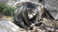 Adelaide Zoo Behind the Scenes Experience: Bear at Breakfast image 1