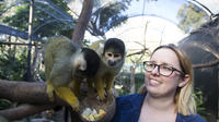 Adelaide Zoo Behind the Scenes Experience: Squirrel Monkey Feeding