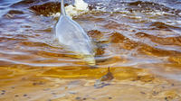 Swan River Dolphin Watch and Wildlife Tour