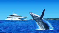 Tangalooma Island Resort Dolphin Viewing Day Cruise with Whale Watching